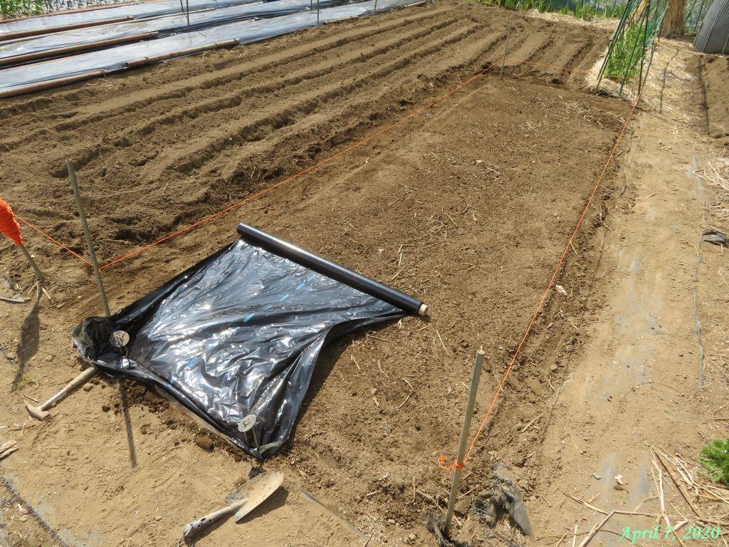 画像8(トマトの畝作り)