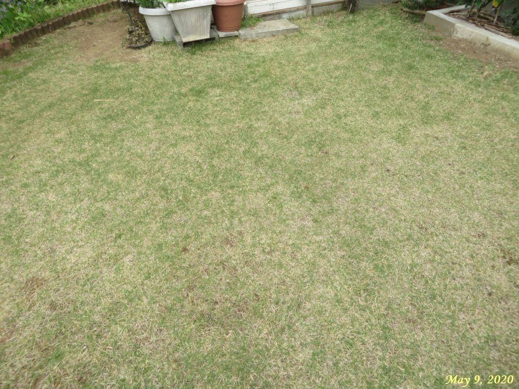 画像1(庭の草取り)