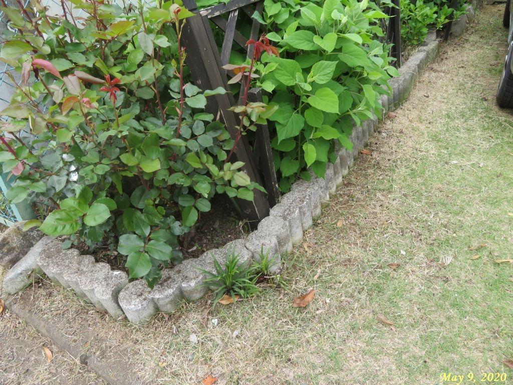 画像2(庭の草取り)