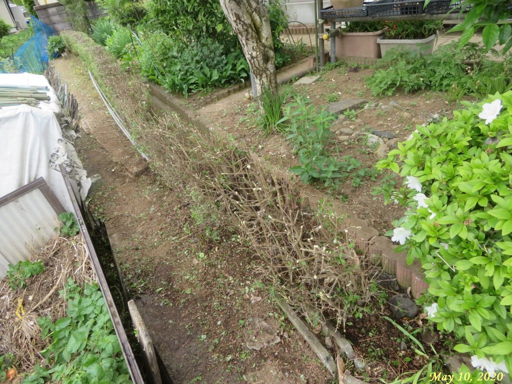 画像6(刈り込み後のドウダンの垣根)