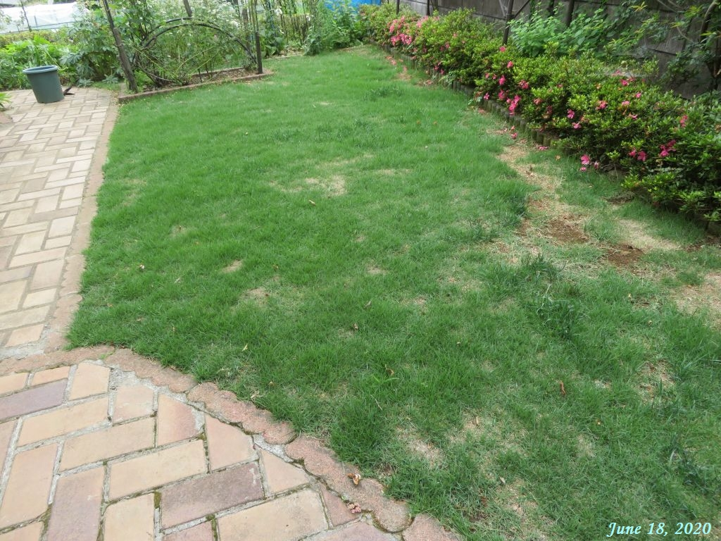 画像7(刈り込み前の芝生)