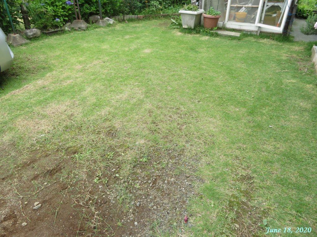 画像11(芝刈り後)
