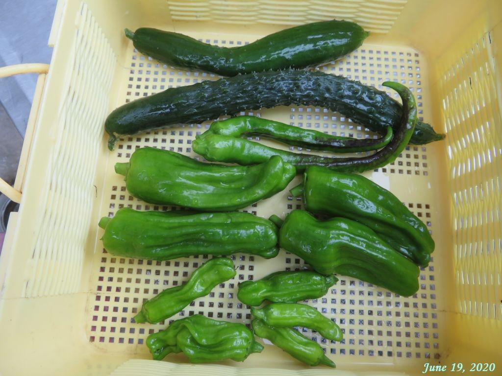 画像23(収穫した野菜)