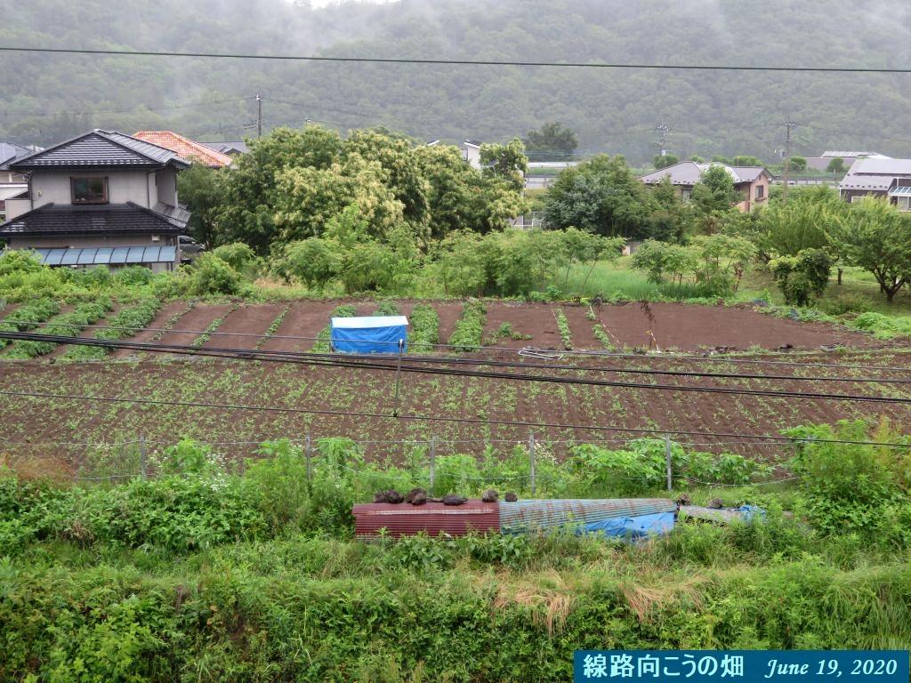 画像24(線路向こうの畑)