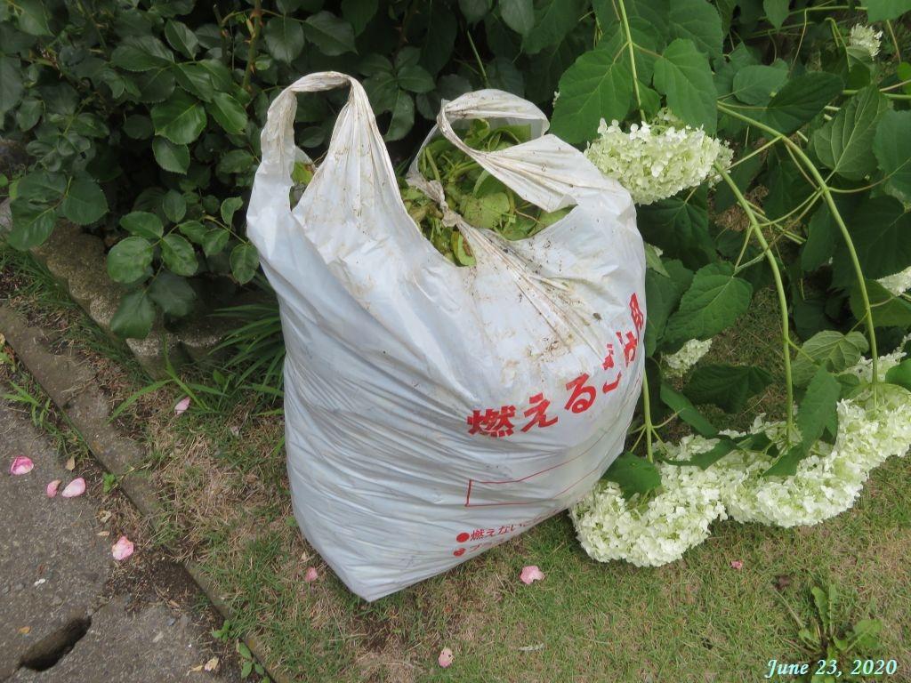 画像3(ジャガイモの茎を取る)