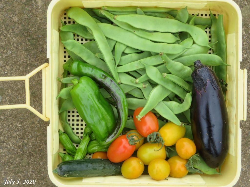 画像9(収穫した野菜)