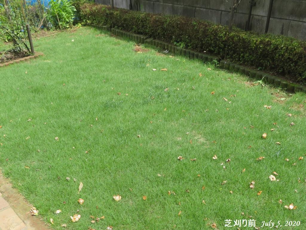 画像13(芝刈り前)