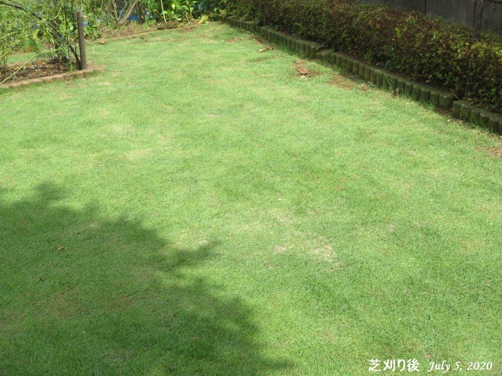 画像15(芝刈り後)