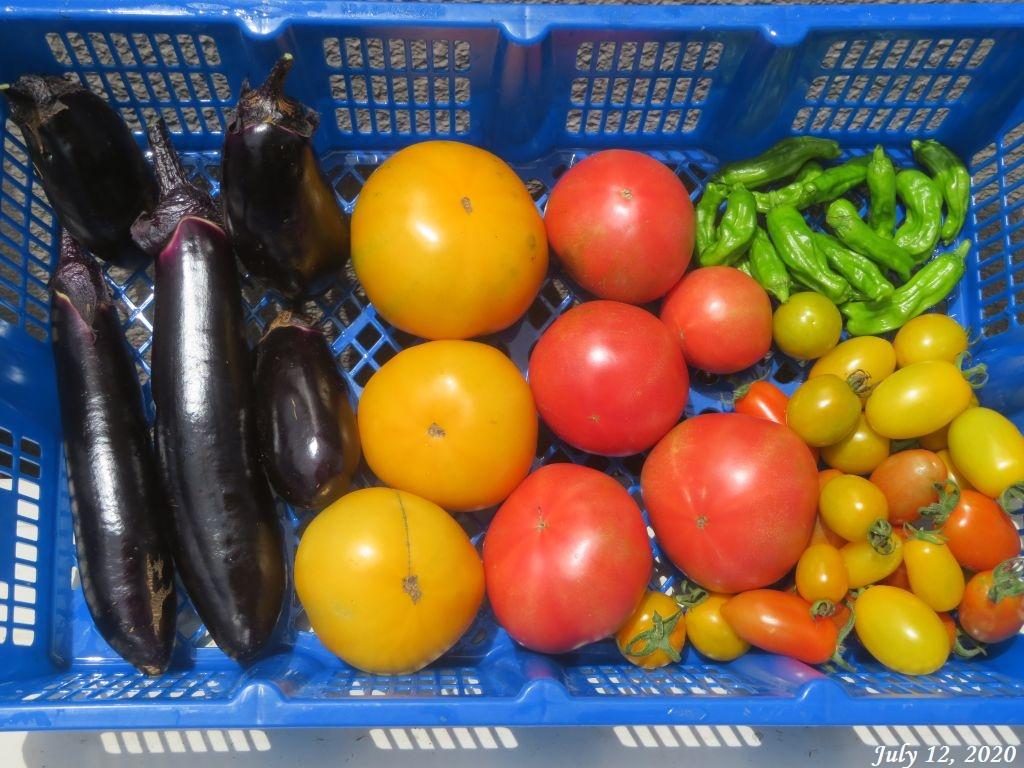 画像13(収穫野菜)