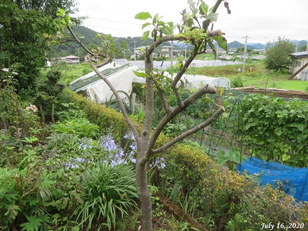 画像12(姫リンゴの木)