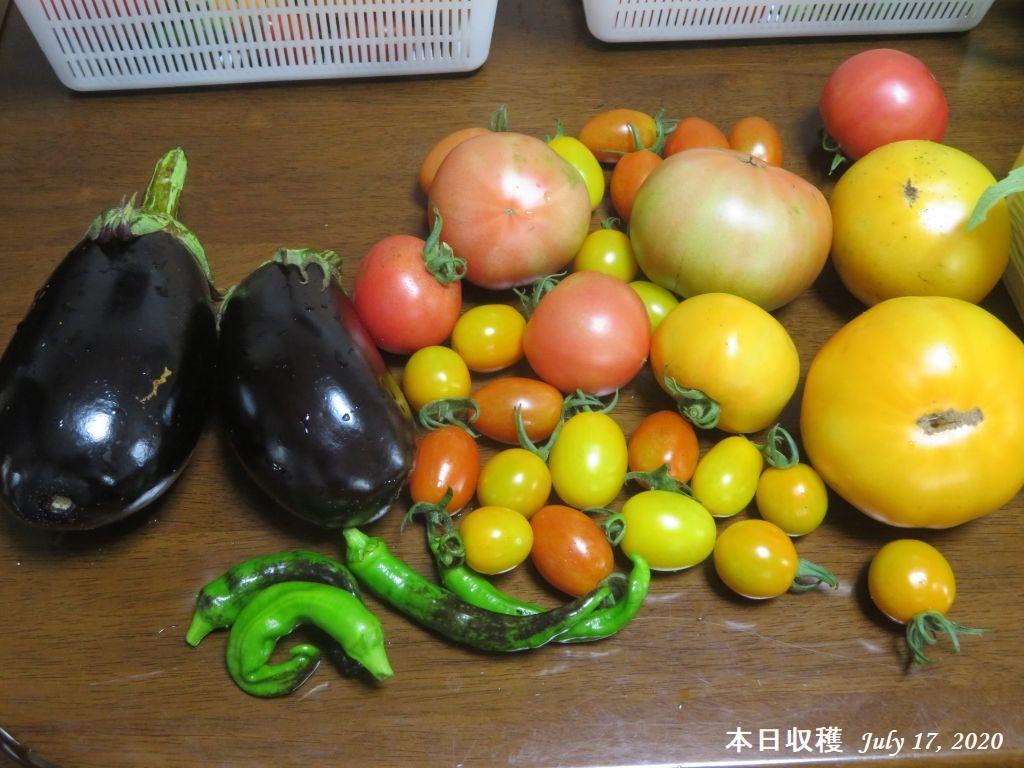 画像1(本日の収穫野菜)