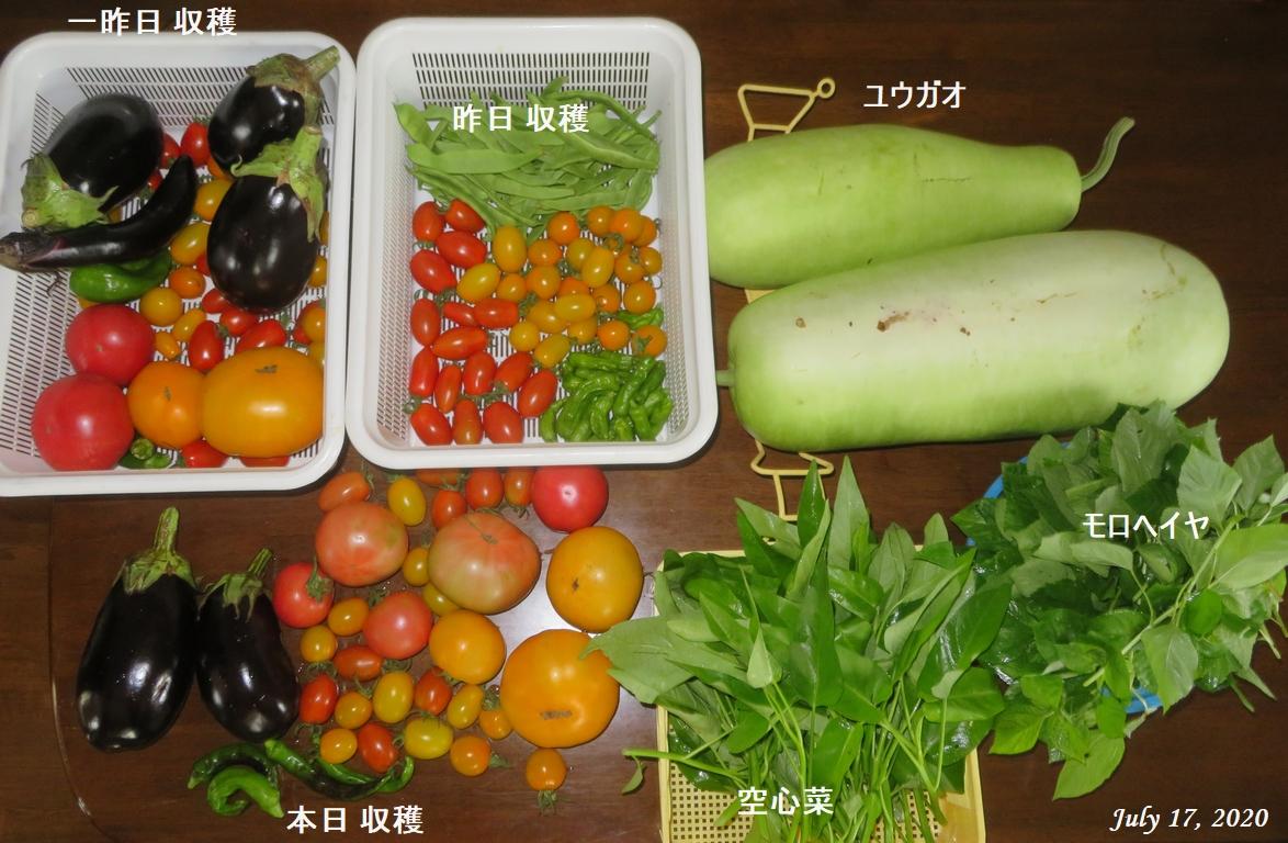 画像3(3日間の収穫野菜)