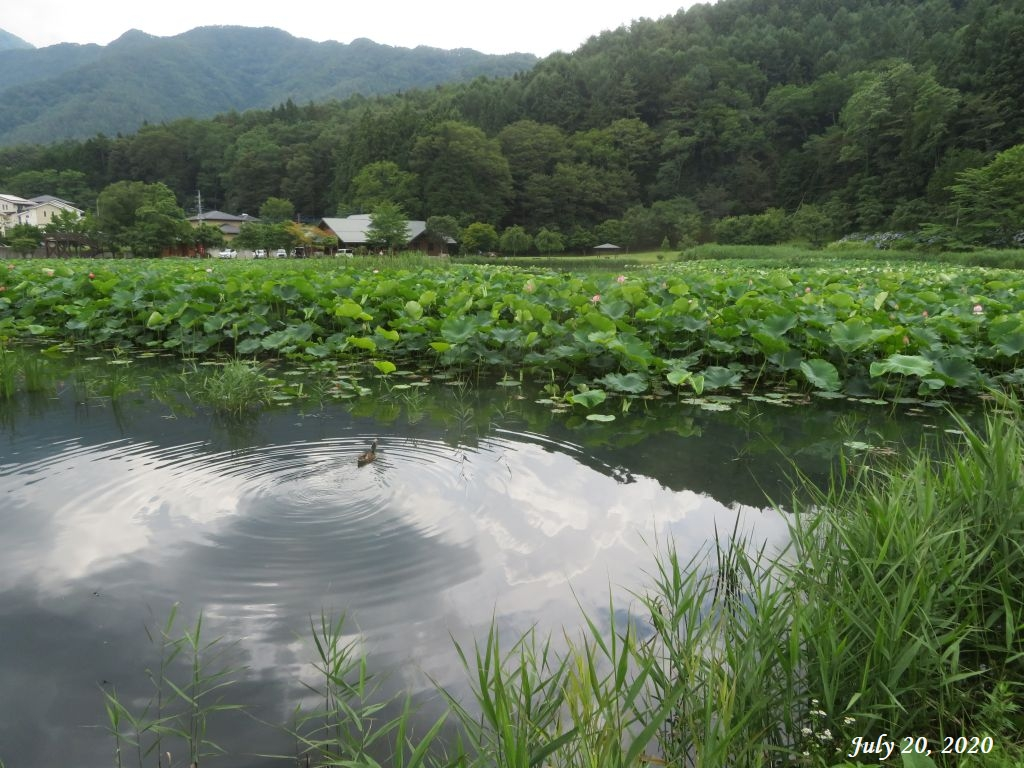 画像1(明見湖)
