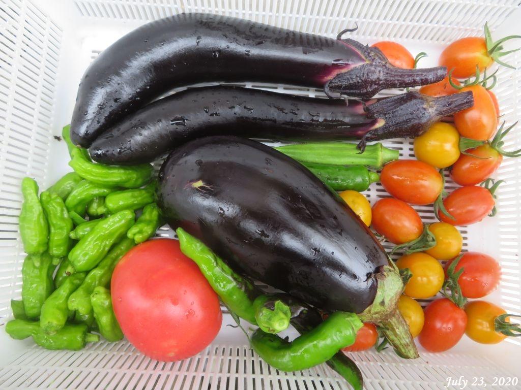 画像6(収穫した野菜)