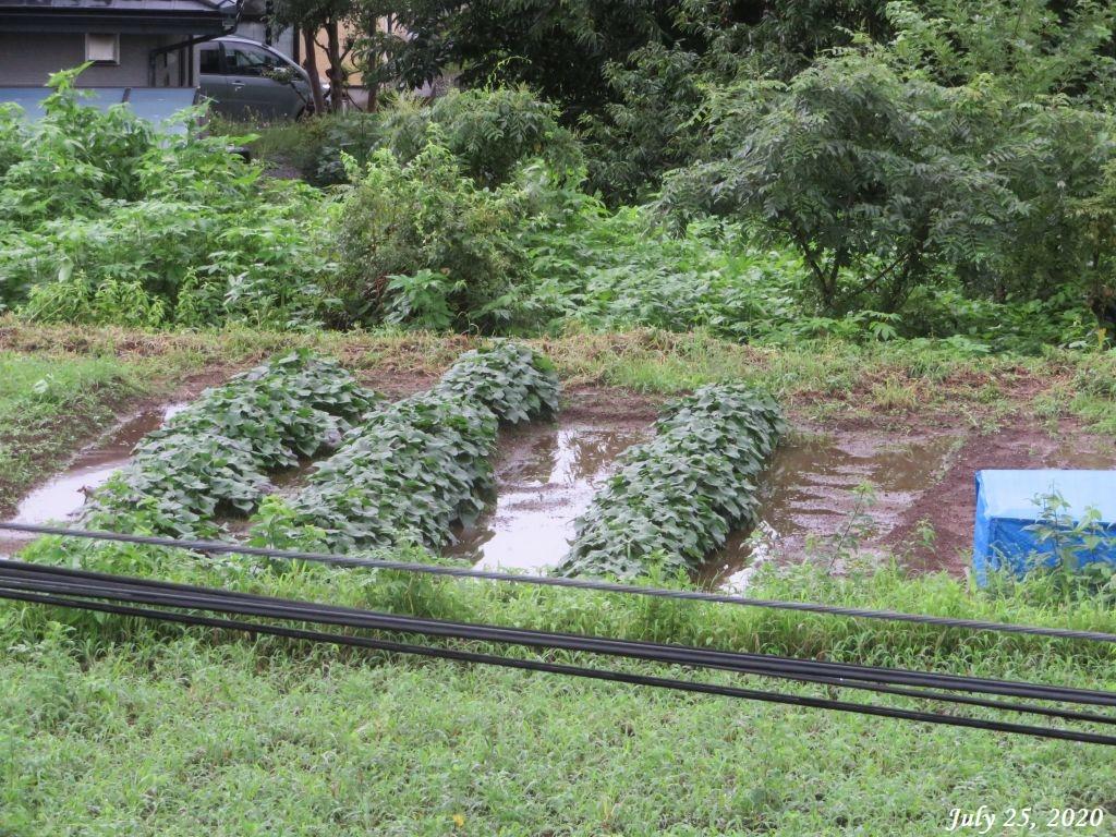 画像9(畑の水たまり)