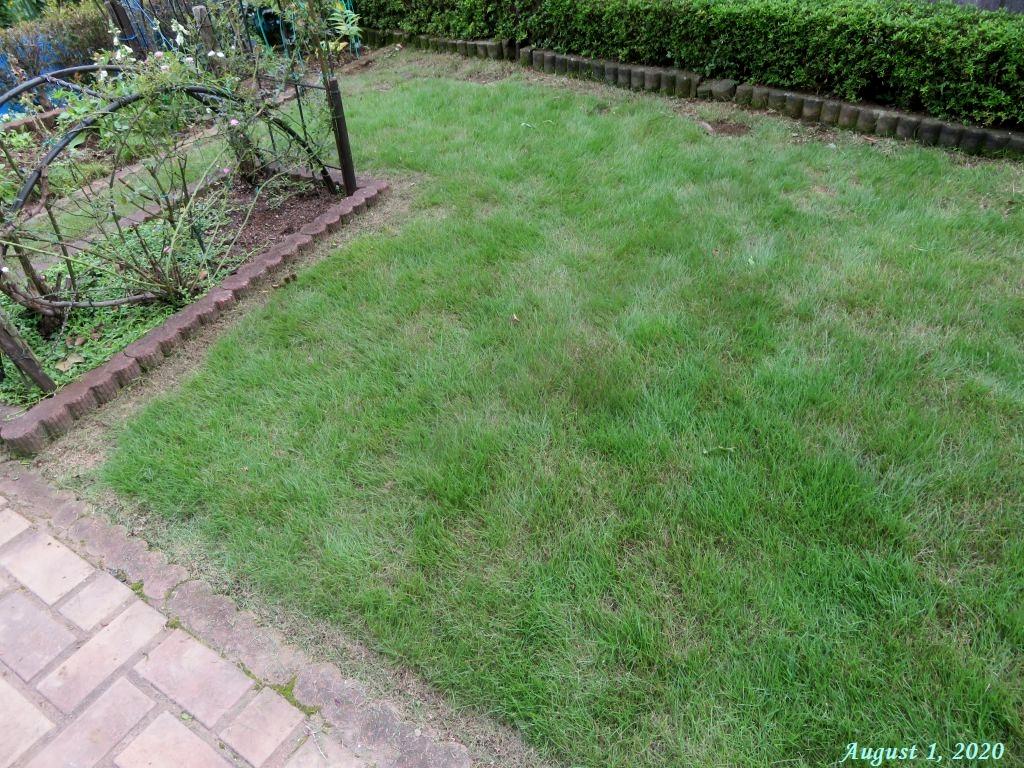 画像9(芝生の際刈り)