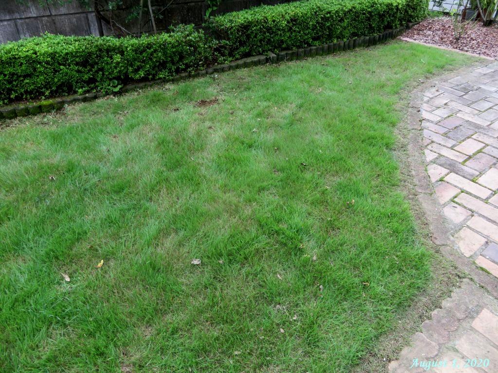 画像10(芝生の際刈り)