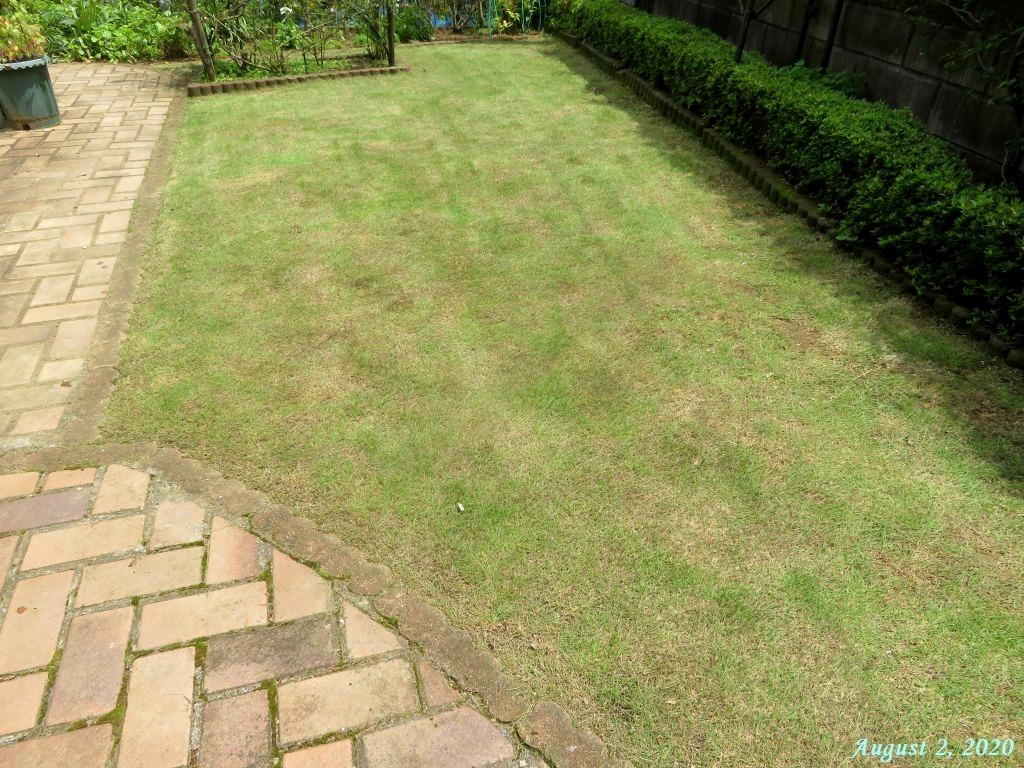 画像10(芝刈り後の芝生)