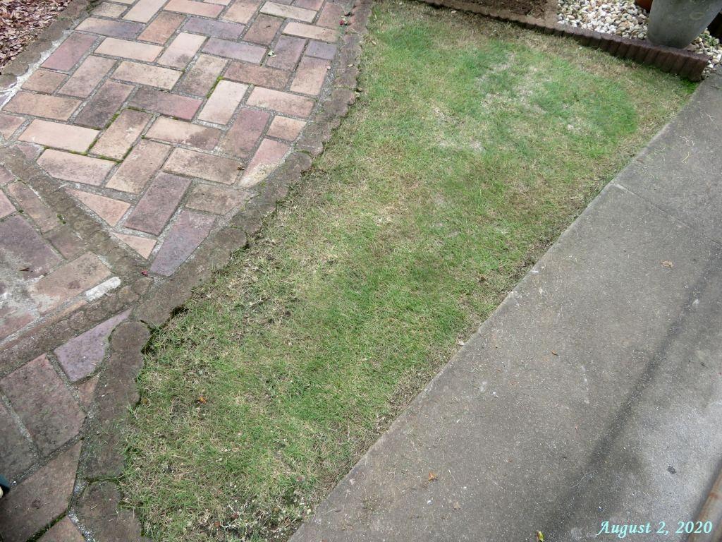 画像11(芝刈り後の芝生)
