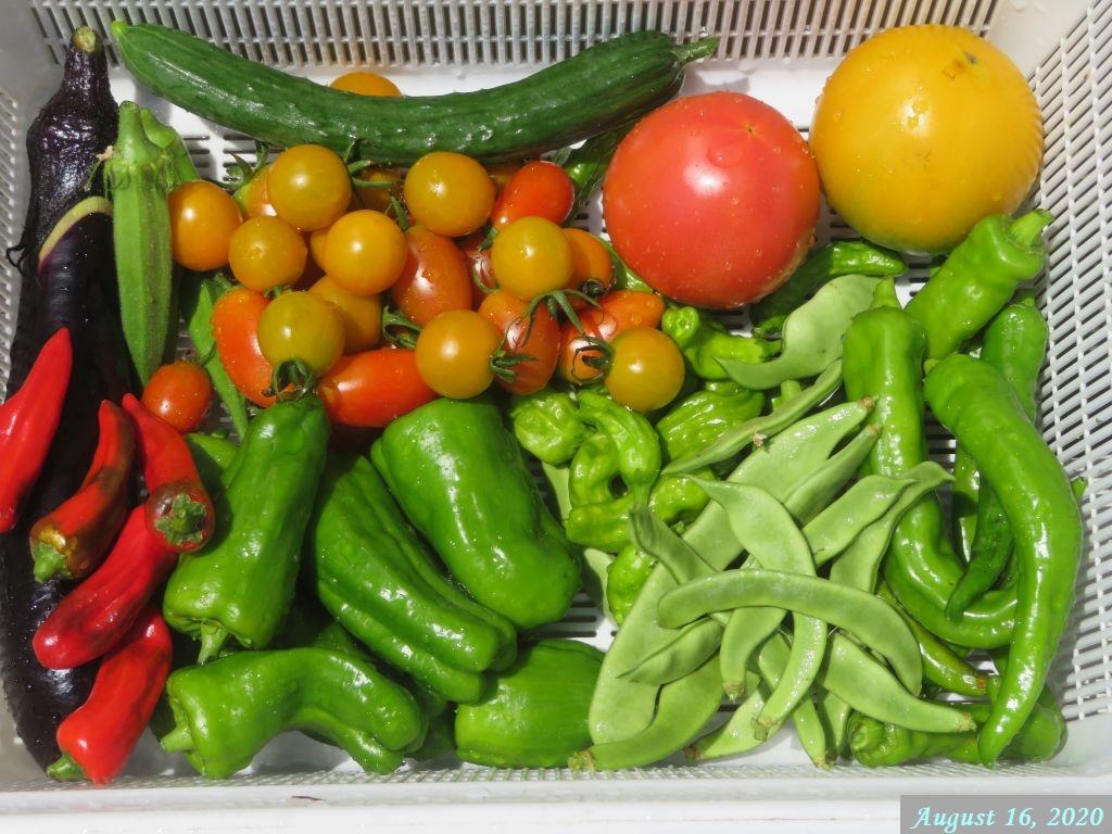 画像7(収穫野菜)