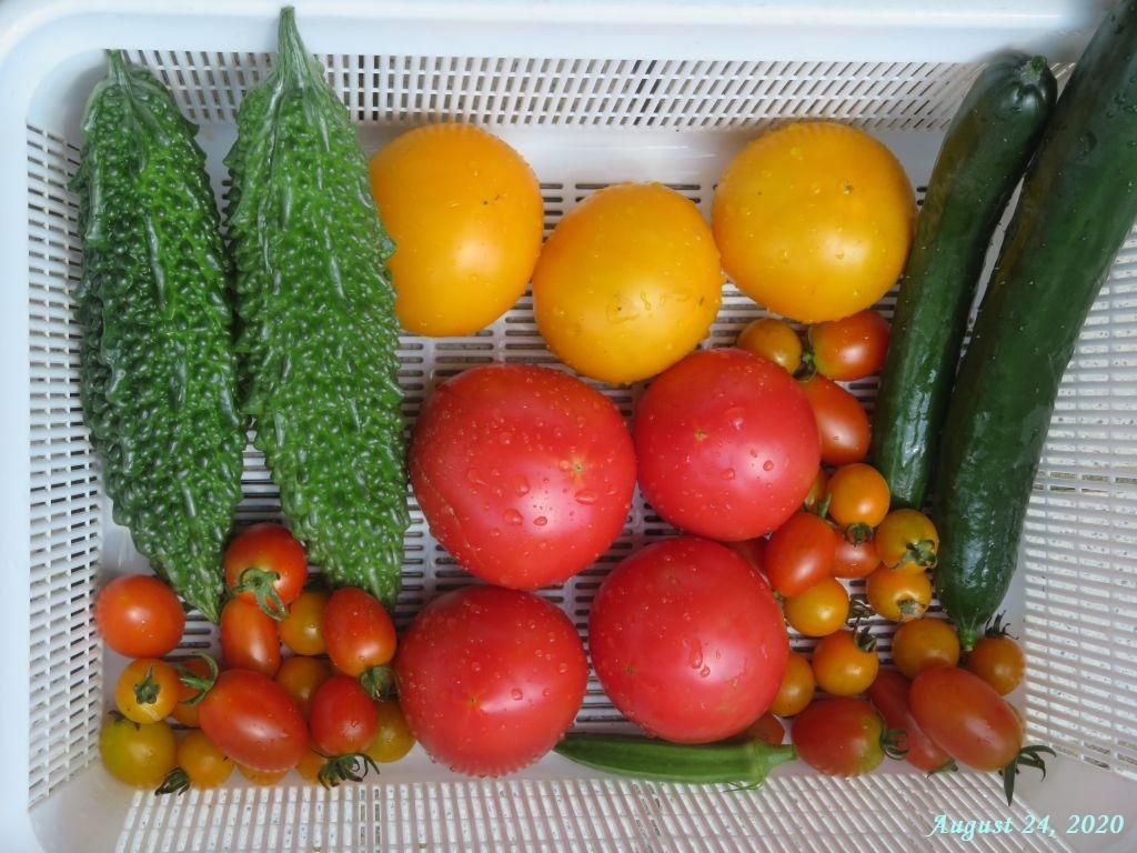 画像11(収穫野菜)
