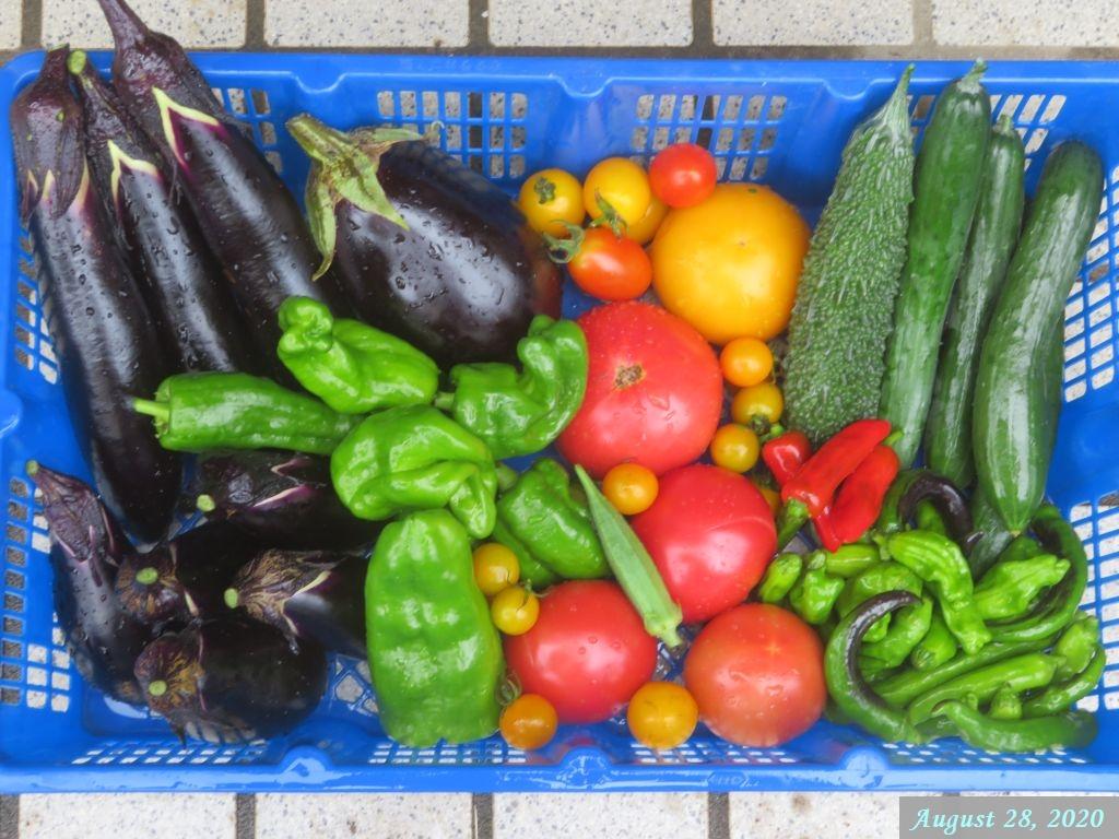 画像8(収穫野菜)