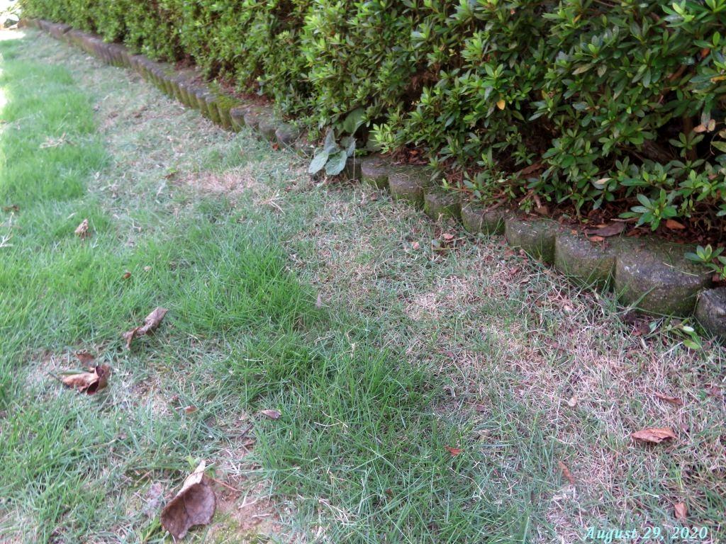 画像8(芝生の際刈り)