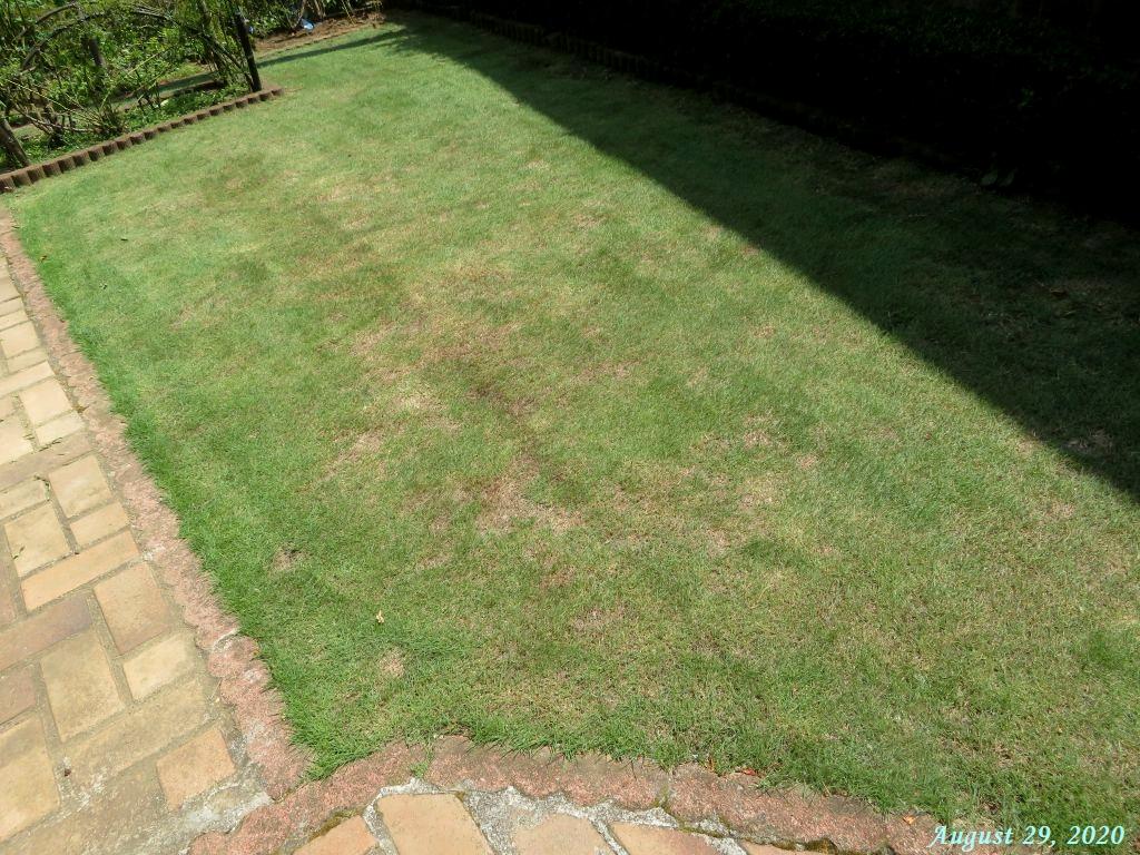 画像11(刈り込み後の芝生)