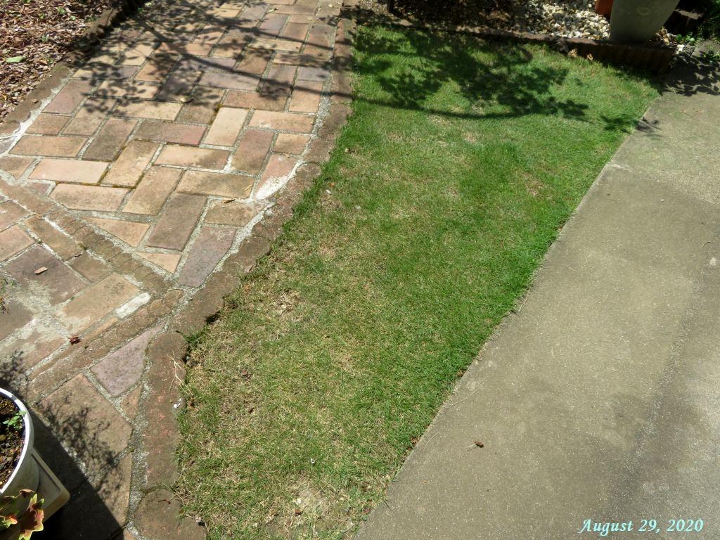 画像12(刈り込み後の芝生)