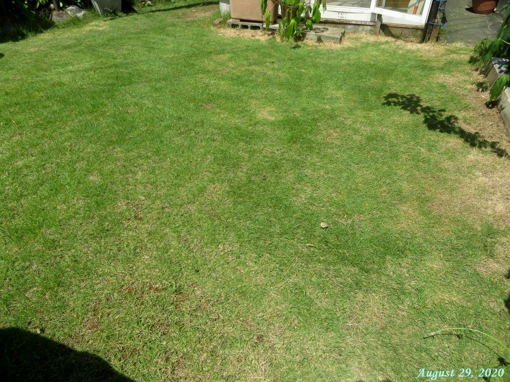 画像13(刈り込み後の芝生)