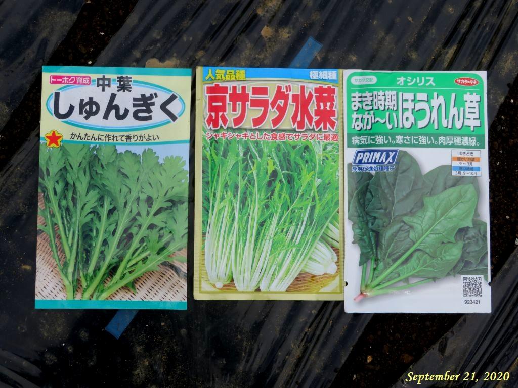 画像12(ほうれん草・春菊・京水菜の種袋)