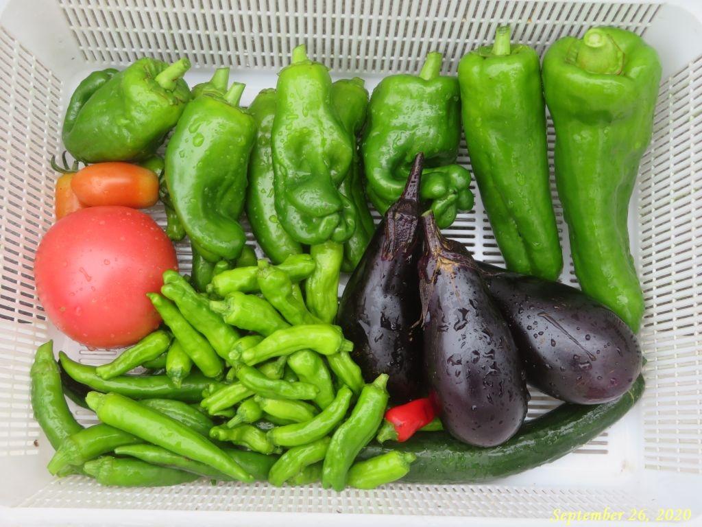 画像18(収穫野菜)