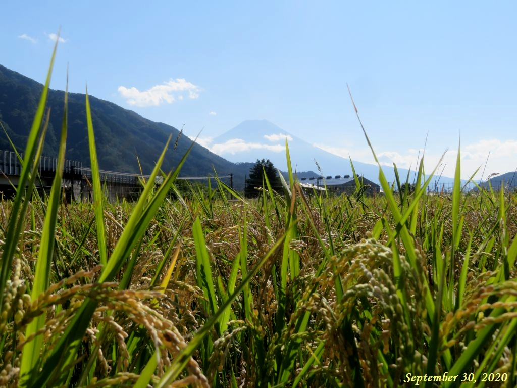 画像13(富士山)