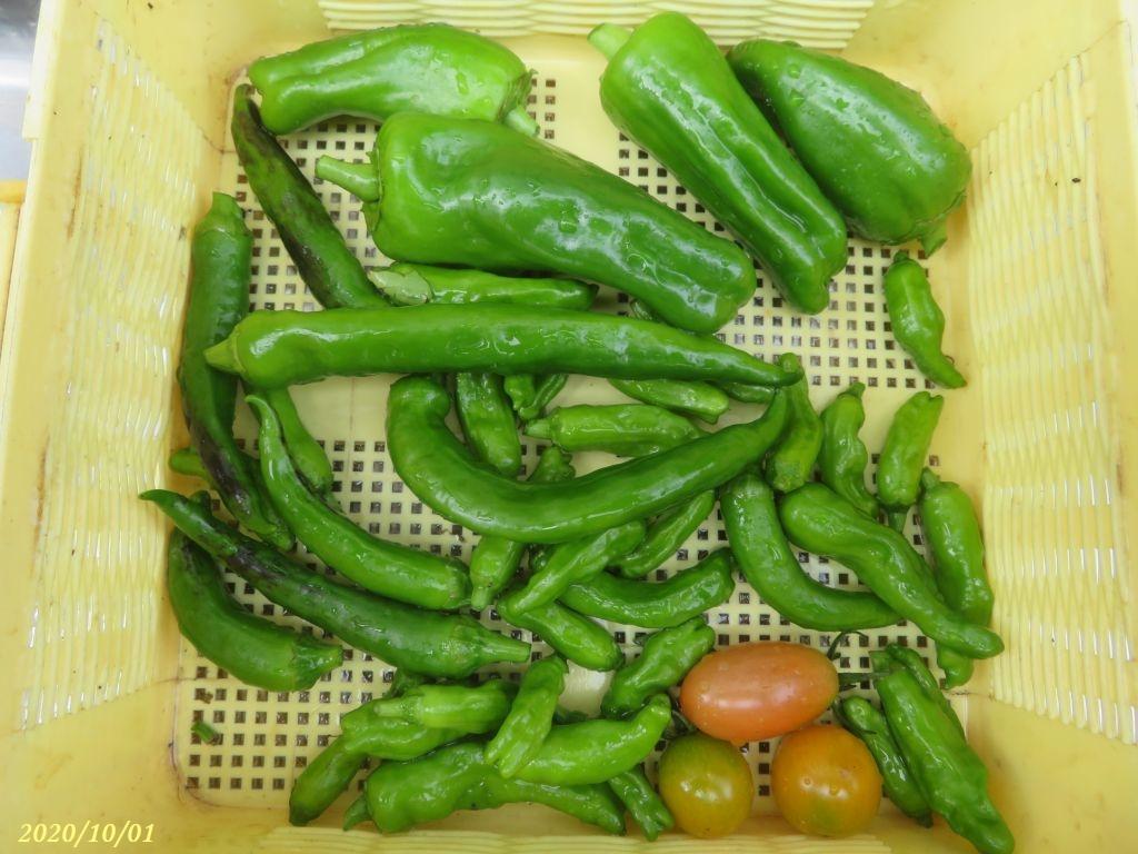 画像10(収穫野菜)