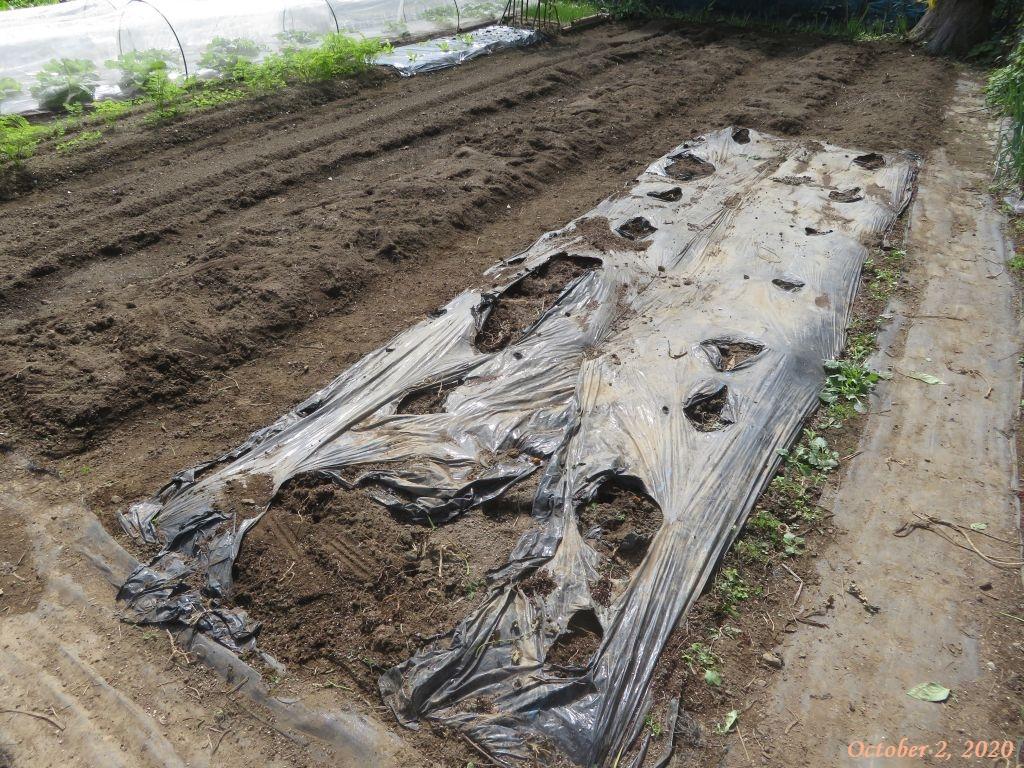 画像6(トマト撤収後の畑)