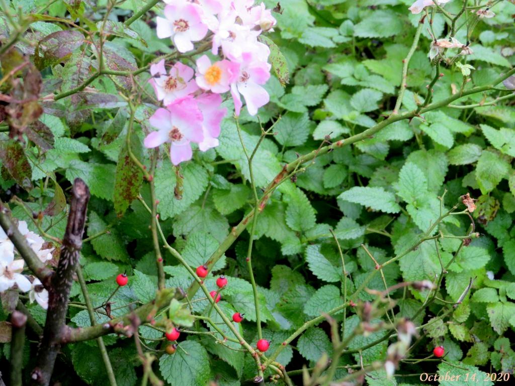 画像10(バレリーナの花とローズヒップ)