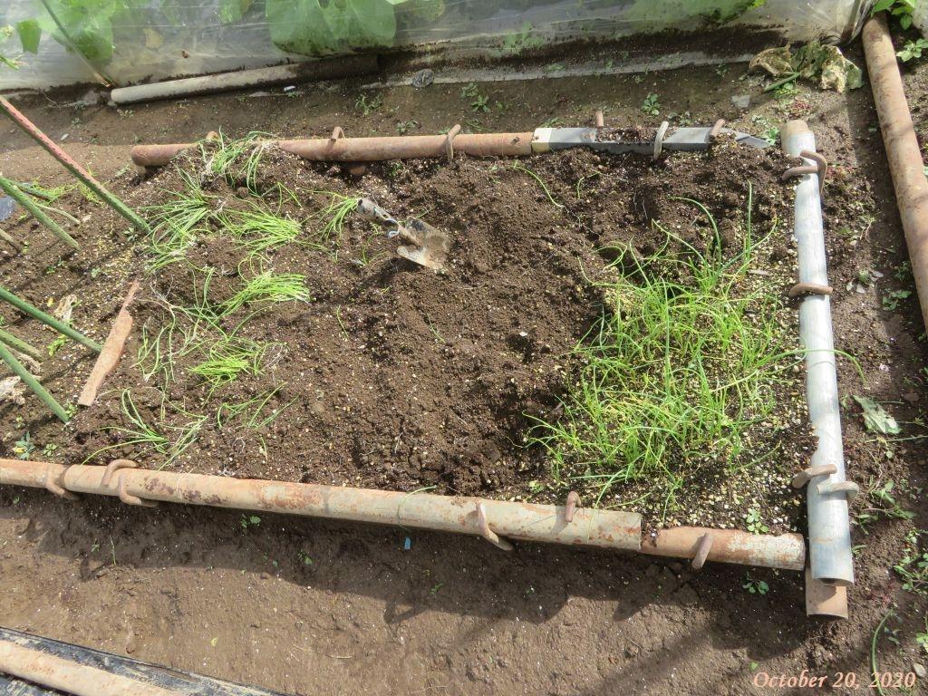 画像8(植え付け前の玉ねぎの苗床)