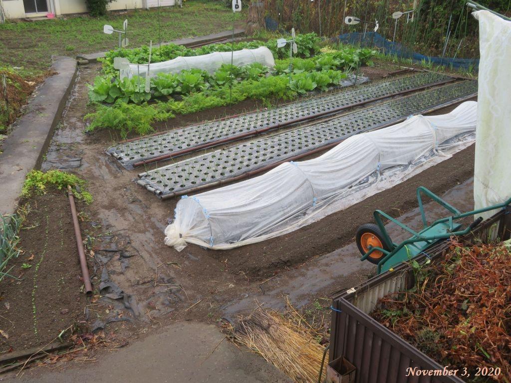 画像3(雨上がりの畑)