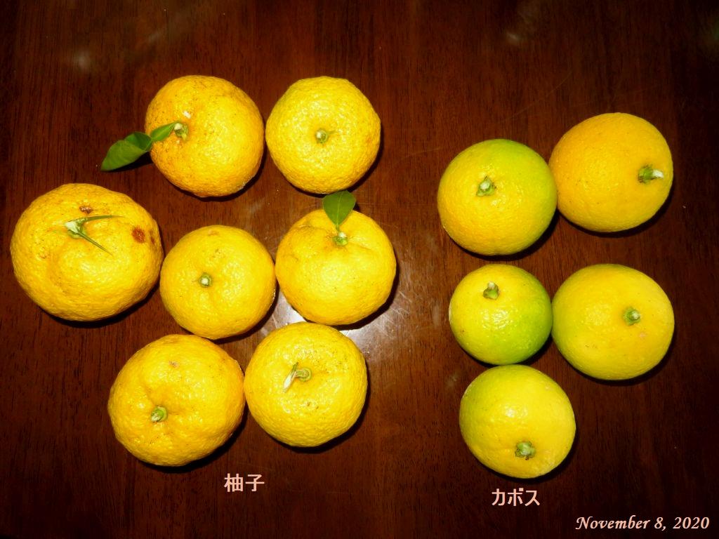 画像4(柚子とカボス)