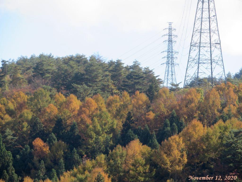 画像2(近くの山の紅葉)
