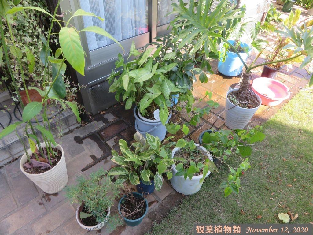 画像5(観葉植物類)