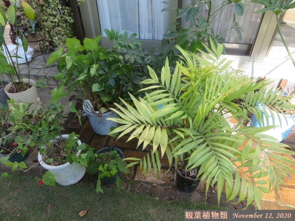 画像6(観葉植物類)