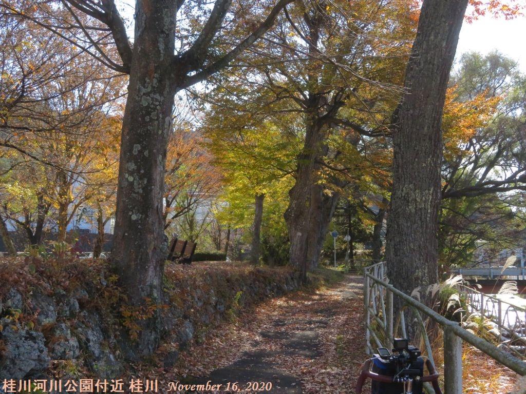 画像3(桂川河川公園付近)