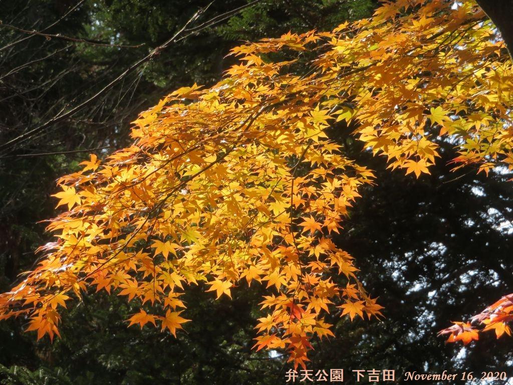 画像10(下吉田弁天公園の紅葉)