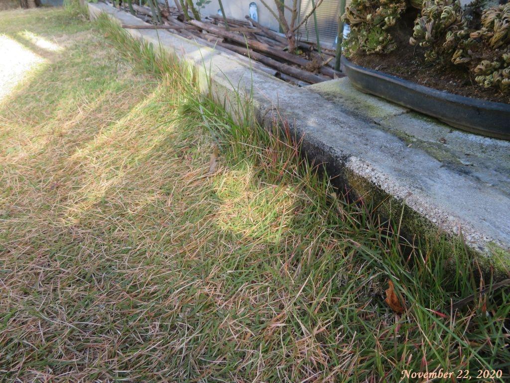 画像13(庭西側花壇際の芝生)