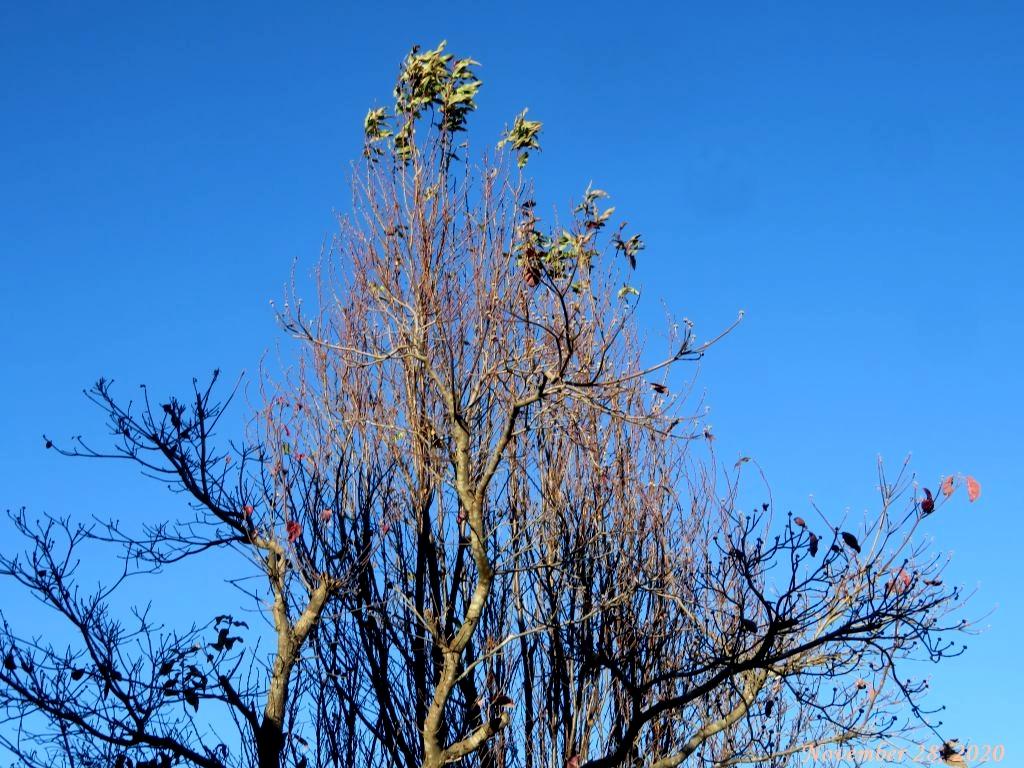 画像2(ハナモモの木)