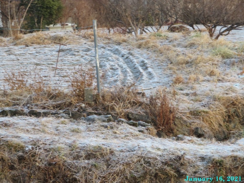 画像2(霜)