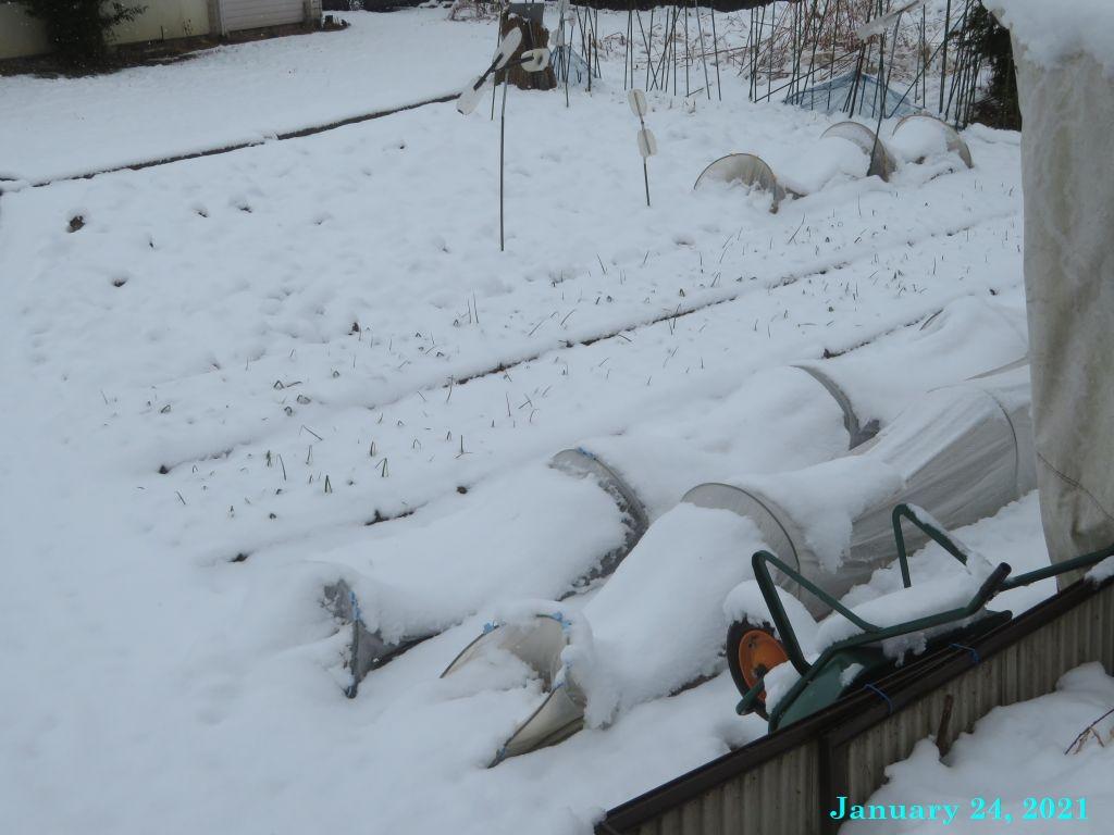 画像2(雪の畑)