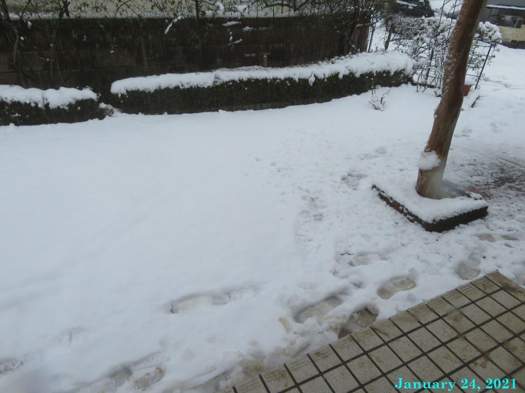 画像8(玄関前の雪)