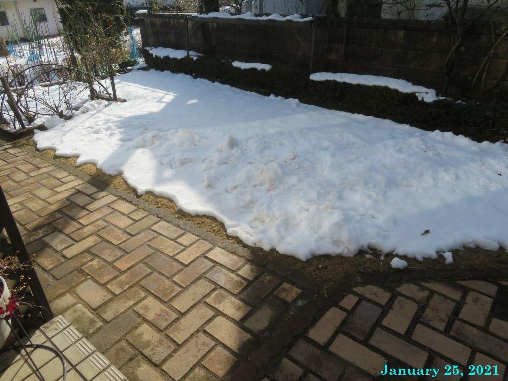 画像4(芝生の雪)